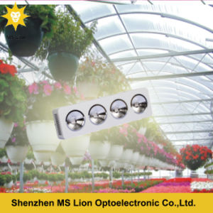 COB LED Grow Light 800W for Growing Vegetation Flowering pictures & photos