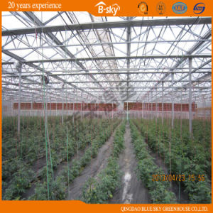 Good Look Venlo Type Glass Greenhouse for Planting Vegetalbes&Fruits pictures & photos