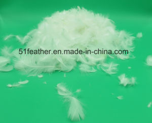 2-4 Cm Washed White Duck Feather (IDFL, USA-2000, EN12934, JIS, GB/T17685-2016) pictures & photos