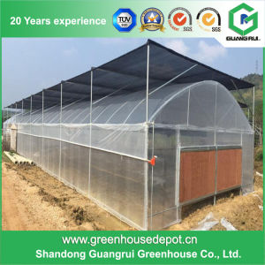 Cheap Commercial/ Agricultural Rectangular Plastic Film Greenhouse for Sale pictures & photos