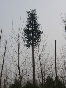 Camouflaged Pine Tree Tower pictures & photos