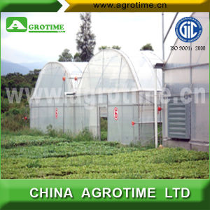 Commercial Multi-Span Greenhouse for Agriculture (CMR5030)