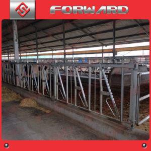 Hot Dipped Galvanized Hydra Headlock / Cattle Headlock pictures & photos