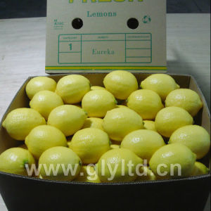 High Quality of Fresh Lemons pictures & photos