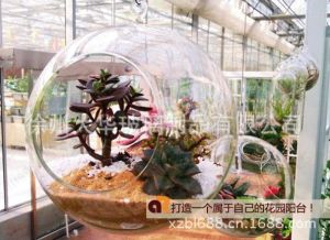 Hanging Glass Ball for Tissue Culture/Wedding pictures & photos