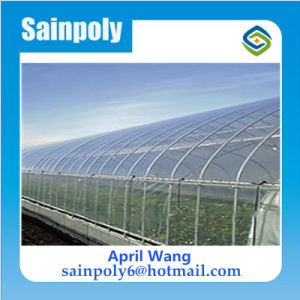 High Quality Wholesale Plastic-Film Multi-Span Greenhouse for Hydroponic pictures & photos