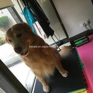 300kg Veterinary Scale/ Pet Scale pictures & photos