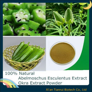 Abelmoschus Esculentus Extract/ Okra Extract Powder pictures & photos