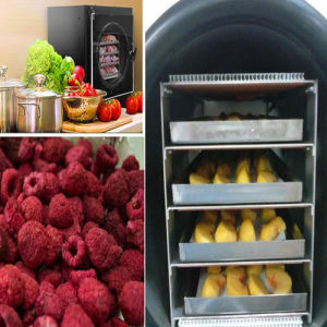 High Quality Fruit Vacuum Freeze Drying Machine pictures & photos