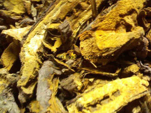 Giant Knotweed Extract 50% Emodin pictures & photos
