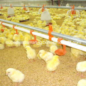 Hot Sale Automatic Poultry Farm Equipment for Broiler Chicken Farm pictures & photos