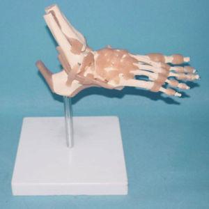 Medical Human Bone Function Skeleton Model (R020908) pictures & photos