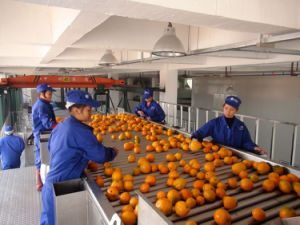 Turnkey Project Wholeo Plant Orange Processing Line pictures & photos