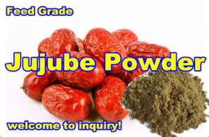 Jujube Powder for Animal (export grade) pictures & photos