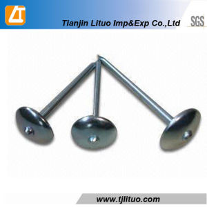 Eg. Umbrella Head Roofing Wire Nails Twisted Shank pictures & photos