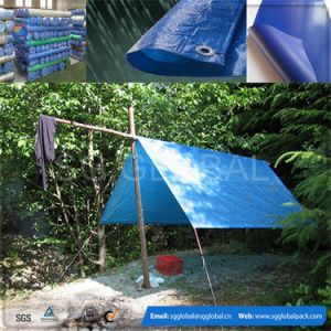 PE Tarps with Different Sizes and Weights pictures & photos