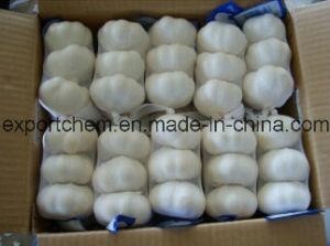 Chinese Fresh White Garlic (4.5-5.0-5.5-6.0cm) pictures & photos