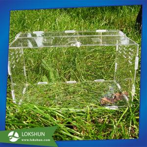 Cage Acrylic Pet Feeding Box Reptiles Pet Box pictures & photos