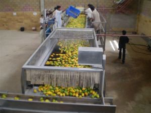 5t/H Mango Pulp Production Line pictures & photos