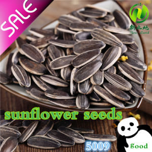 New Crop High Quality Sunflower Seeds 5009 pictures & photos