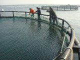 High Quality Anti Wind HDPE Circular Aquaculture Fishing Net Cage pictures & photos