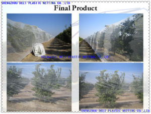 Shade Net for Agriculture use pictures & photos