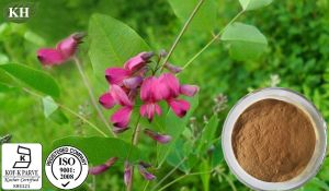 100%Natural Lespedeza Capitata Extract / Quercetin pictures & photos