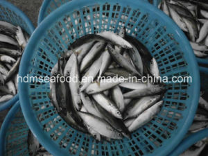 Block Quick Frozen Seafood Mackerel Fish (Scomber Japonicus) pictures & photos