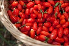 Goji Berry 2014new Crop (180-500grains/50g) pictures & photos