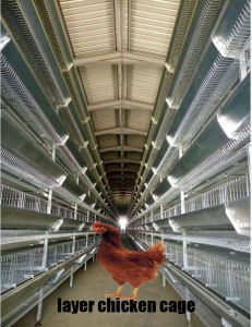 Poultry Battery Cages Laying Hens Farms with Automatic System pictures & photos