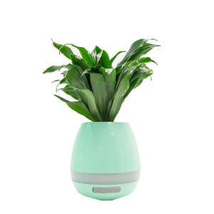 Funny Toy USB Chargeable Bluetooth Speaker with Plant Aroma Tablet pictures & photos