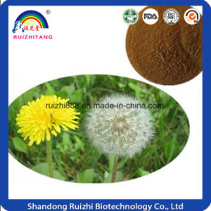 GMP Factory Extract Dandelion Extract Tablet pictures & photos