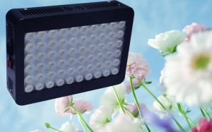 Hydroponic Full Spectrum 300W Panel LED Grow Lights pictures & photos
