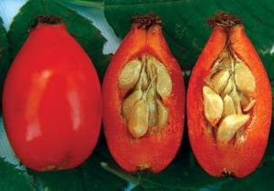 Organic Rosehip Extract for Foods, Supplements and Cosmetics pictures & photos