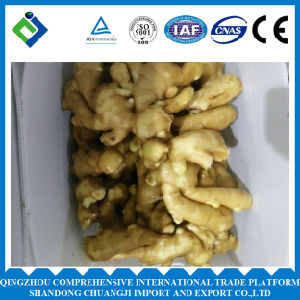 Chinese Fresh Ginger with Different Size pictures & photos