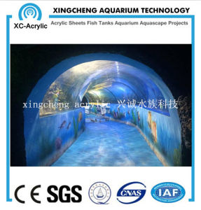 Large Transparent Acrylic Material Acrylic Seal Tank Project pictures & photos
