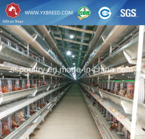 Silver Star High Quality Poultry Egg Layer Chicken Cage pictures & photos