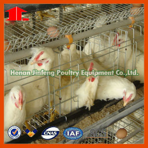 Egg Laying Chicken Cages with Drinkers, Feeders, Frame, etc pictures & photos