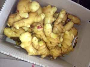 New Crop Fresh Ginger (100G and up) pictures & photos