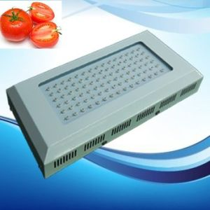 90W 85-265V Red: Blue=8: 1 LED Grow Light for Tomato pictures & photos