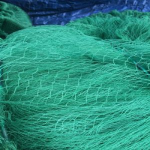 100% Virgin HDPE Anti-Bird Nets pictures & photos