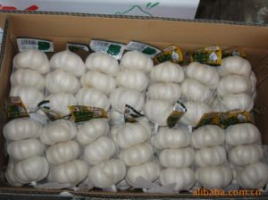 Export New Crop Chinese Pure White Garlic pictures & photos