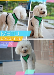 High Quality Light Weight Breathable Grid Reflective Service Dog Harness pictures & photos