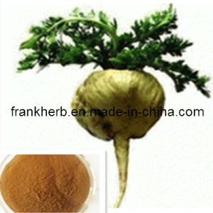 Maca Root Extract (2000kg Stocks) pictures & photos