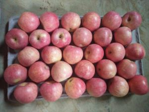 Fresh Qinguan Apple with Best Quality pictures & photos