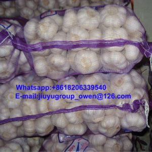 Prompt Shipment New Crop Raw Normal/Pure White Garlic