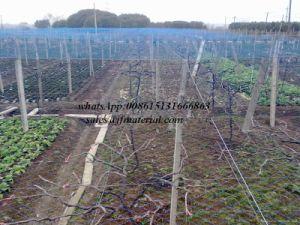 Fruit Tree Bird Netting HDPE Bird Net pictures & photos