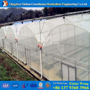Multi-Span Agricultural Greenhouse for Cucumber pictures & photos