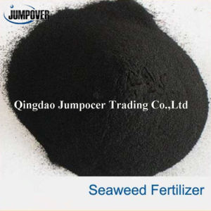 Organic Fertilizer Seaweed Extract for Plant pictures & photos