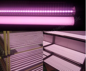 1.2m 18W PF>0.9 Pink Color T8 LED Tube pictures & photos